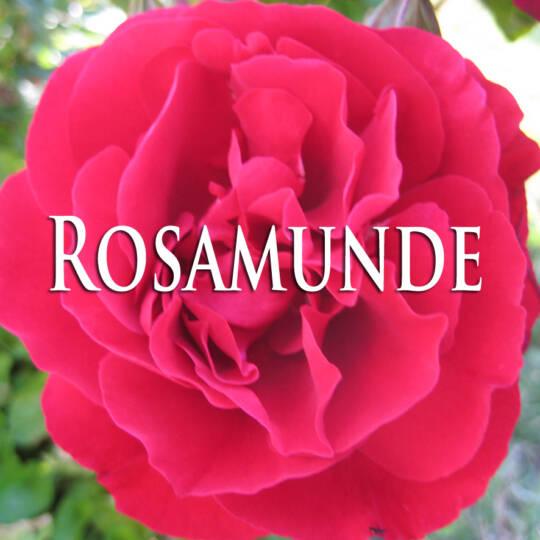 Rosamunde Lied Cover