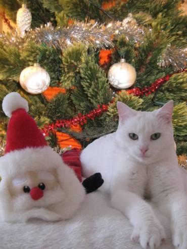 Weihnachtslieder und Schlager im Tierheim