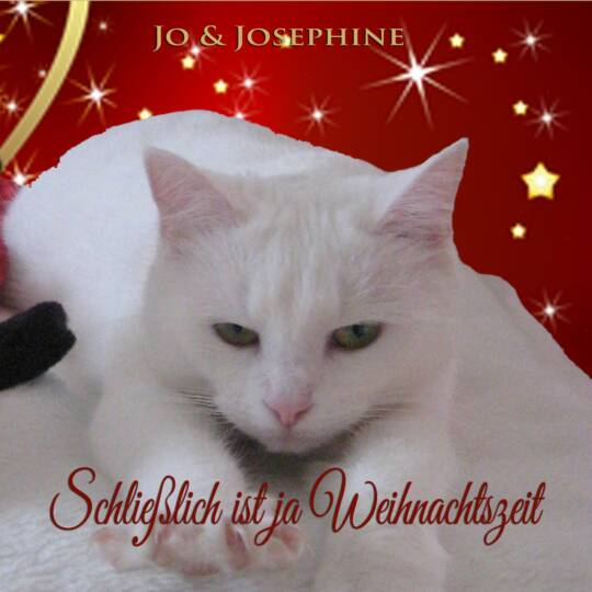 Weihnachtslied mit humorvollem Text Cover mit weißer Katze und Sternen